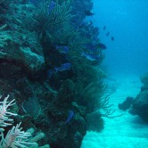 Guided Shore Dive at Fort Wetherill September 5,2017 @ 9AM